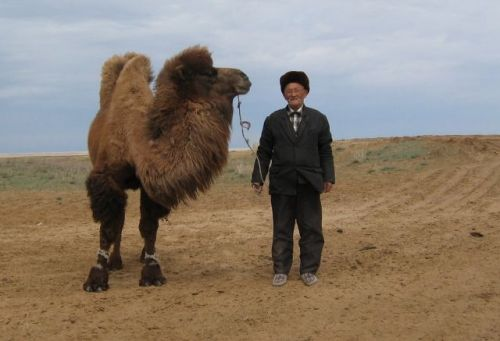 Old_Kazakh_fellow_with_his_camel.jpg