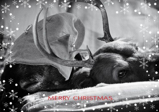 Christmas-Card-2017.jpg