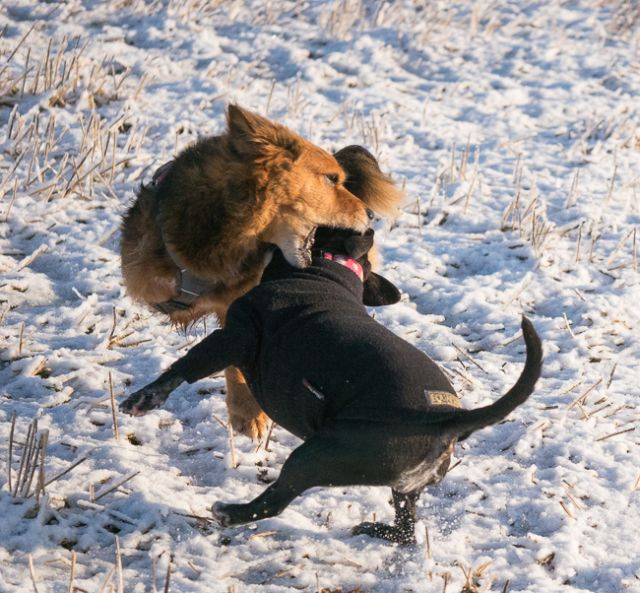 Elsie-and-Meg-playing-in-snow-2-of-3.jpg