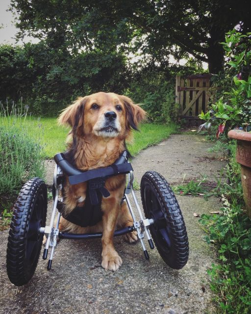 Meg-in-wheels-1-of-1.jpg
